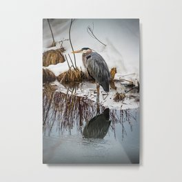 Heron pose along the bank Metal Print