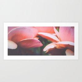 rose edge Art Print