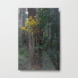 Autumn In The Redwoods Metal Print