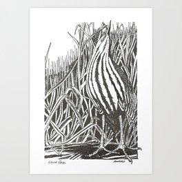 love call-Juvenile Bittern Art Print