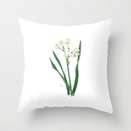 Cluster Daffodils Botanical Illustration Throw Pillow
