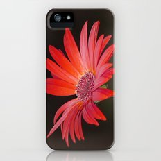 Red Gerbera Daisy on Brown  iPhone (5, 5s) Slim Case