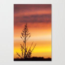 Simple Plant in Camargue Sunrise Canvas Print