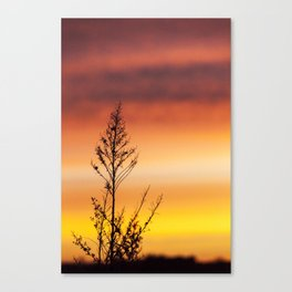 Simple Plant in Camargue Sunrise Canvas Print