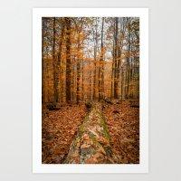 Down Fall Tree Art Print