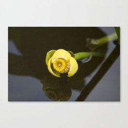 Everglades Flower Canvas Print