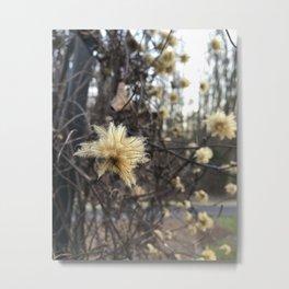 Plush Flower Metal Print