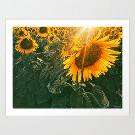 summer in the fields Art Print