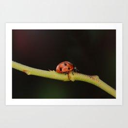 Ladybug On A Twig Art Print