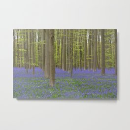 Bluebell Forest 1 Metal Print