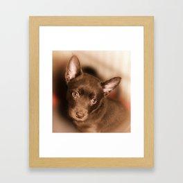 Puppy- Australian Kelpie Framed Art Print