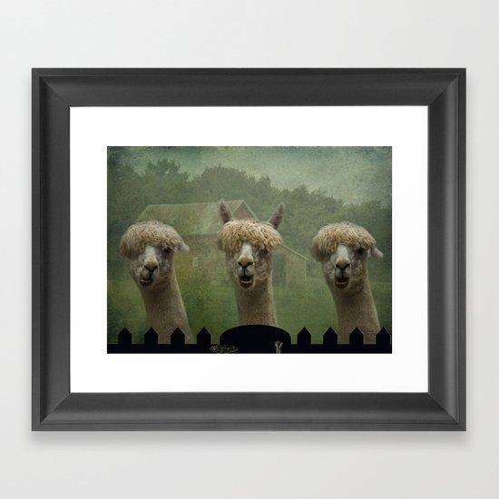 Alpaca Farm Framed Art Print