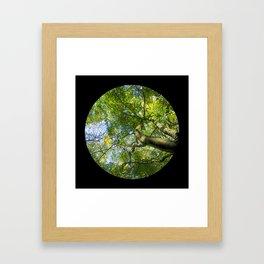 Trees from below 3 Framed Art Print