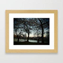 Cherry Blossoms II Framed Art Print