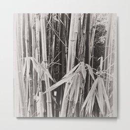Beautiful bamboo in sepia Metal Print