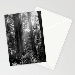 Evening Light Stationery Cards