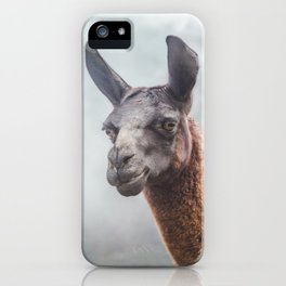 Curious, wise looking guanaco / llama on a misty morning in the Andes mountains, Peru iPhone Case