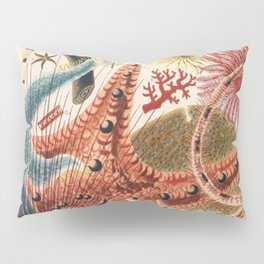 Great Barrier Reef Echinoderms from The Great Barrier Reef of Australia (1893) by William Saville-Ke Pillow Sham