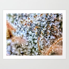 Diamond OG Top Shelf Trichomes Close Up View Art Print