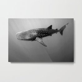 Big Fish, B & W Metal Print