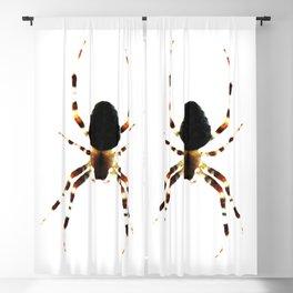 Spider Blackout Curtain