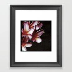 Pink Frangipani Framed Art Print