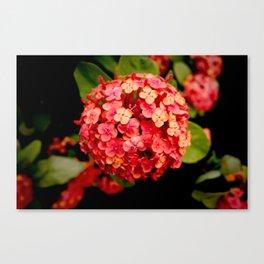Maui Red Canvas Print