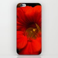 fierce iPhone & iPod Skins featuring Fierce by Stephanie Cantwell