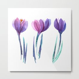 Watercolor hand painted crocuses isolated on a white background. Spring flowers. Metal Print