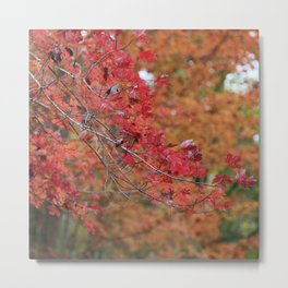 Fall Branches - Red Metal Print