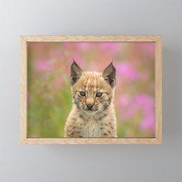 Falk - the lynx kitten Framed Mini Art Print