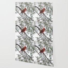 Wet Snow Cardinal (square) Wallpaper