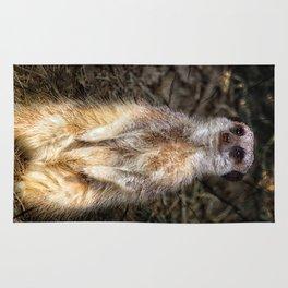 Meerkat Rug
