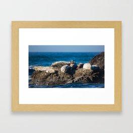 A Harbor Seal Waves Hello Framed Art Print