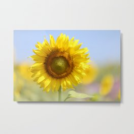 Sunflower - Flower, Floral, Nature Photography Metal Print