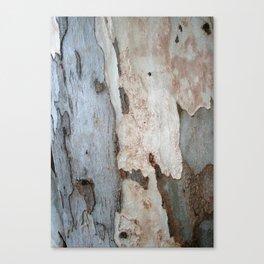 Bark Of A Eucalyptus Tree  Canvas Print