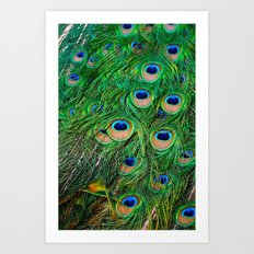 Peacock Passion Art Print