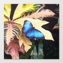 Big Ol' Blue Canvas Print
