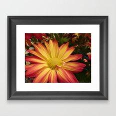 Fiery Flower Framed Art Print