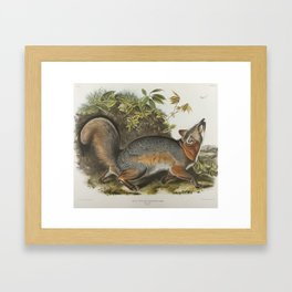 Vintage Illustration of a Grey Fox (1843) Framed Art Print