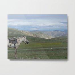 Mongolian Horse Metal Print