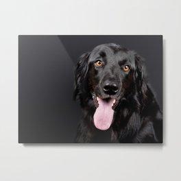 Black Hovawart Dog Tongue Out Metal Print