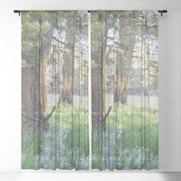 Trees in Yellowstone Sheer Curtain