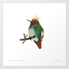 Rufous-crested Coquette Art Print