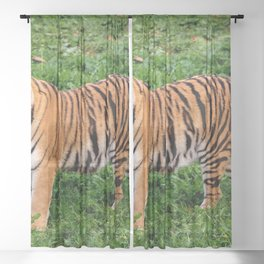 Beautiful Nature Photos With Animals Amazing Tiger Sheer Curtain