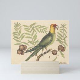 The Parrot of Carolina Vintage Bird Print, Mark Catesby, 18th Century Mini Art Print