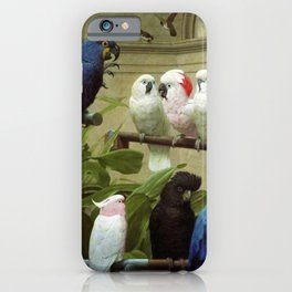 Hyacinth Macaw, Black Cockatoo, Cockatoos, Peach Cockatoo Select Committee by Henry Stacy Marks iPhone Case