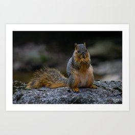 Perched Squirrel Eating a Nut Art Print