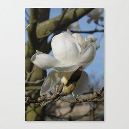 Yulan-Magnolia Canvas Print