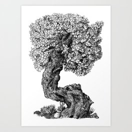 Ancient Tree Art Print